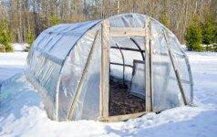 Specialistai apie šiltnamio priežiūrą žiemą