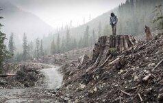 Dokumentinių filmų festivalyje - vaizdai iš naikinamų pasaulio miškų