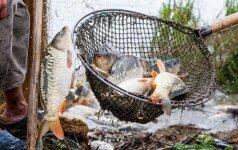 Laisvės skonis: kuo skiriasi žuvis, augusi ežere ir žuvininkystės tvenkinyje?