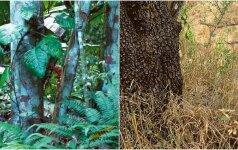 Pasitikrinkite savo budrumą: ar surasite šiose nuotraukose gyvūnus?