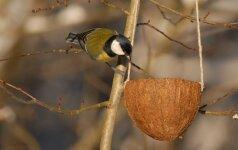 Žiemą paukščiams galite įrengti lesyklas