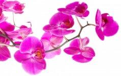 Sužinokite, kokios gėlės įkvepia keisti gyvenimą, o kurios – čiulpia energiją