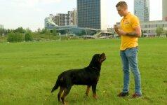 Pirmoji dresūros pamoka: kaip motyvuoti savo šunį atlikti komandas