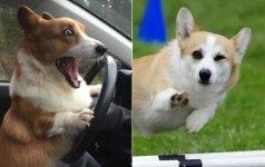 Tikri juokdariai: 10 korgių akimirkų, kurios privers nusišypsoti