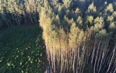 Pranešama, kad šiemet gerėjo miškų būklė
