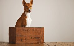 Darau Pats: daugybė medinių pakavimo dėžių panaudojimo būdų