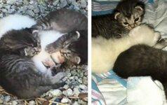Labai jautri istorija: kačiukai saugo sužeistą savo sesutę