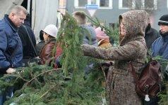 Nemokamai bus dalijamos Kalėdinės eglių šakos: paskelbtos akcijos vietos