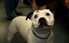 Kovinių šunų savininkams Vienoje bus taikomas alkoholio kiekio kraujyje apribojimas