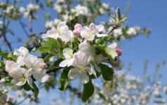Svarbiausi gegužės mėnesio darbai darže ir sode