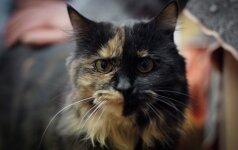 Marmurinė katytė ieško namų