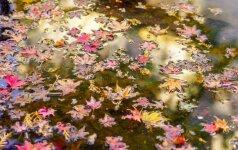 Rūpinamės kūdros augalais ir žuvimis prieš žiemą