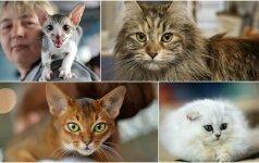 Top 10 populiariausios kačių veislės: apie jas svajoja daugelis