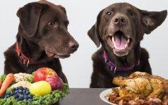 Turite tai žinoti: kaip šuns organizmas reaguoja į riebalus