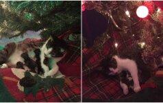 Tikras Kalėdų stebuklas: katė po eglute atsivedė kačiukus