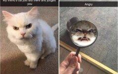 Katės irgi gali būti piktos: šios nuotraukos – puikiausias įrodymas