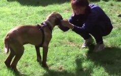 Jaudinanti akimirka: suaugęs šuo pirmą kartą pajaučią žolę po kojomis