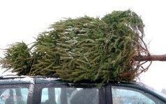 Kalėdos: kokią eglutę pasirinkti – gyvą, dirbtinę, vazonėlyje ar šaką?