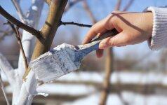 Medžių balinimo ABC: viskas paprasčiau, nei gali pasirodyti