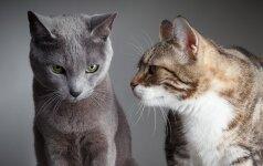 Ką jūsų katės veislė sako apie JUS?