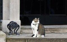 Gyvūnų globėjus sukrėtė žmonių abejingumas