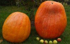 Konkurso Mano rudens derliaus gėrybės nugalėtojai
