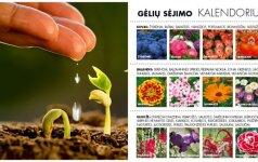 Gėlių sodinimo kalendorius: naudingi patarimai, kurie padės pasipuošti gražiausiais žiedais