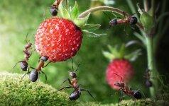 Specialistai pataria, kaip išnaikinti sodo kenkėjus be chemikalų