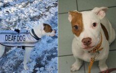 Neįtikėtina apkurtusio šuns istorija: po ilgų klajonių jis rado jaukius namus