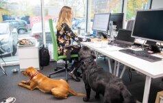 Darbuotojų savijauta rūpinasi leisdami dirbti su gyvūnais: rezultatai geresni nei tikėtasi