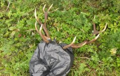 Kruvinoji medžioklė: rankose – žvėries galva, mašinoje – aplinkosaugininkas