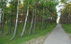 Kaip oro tarša kenkia medžiams?