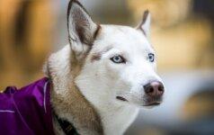 Priežastys, kodėl su šunimi negalima kalbėti pakeltu tonu