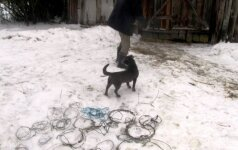 Brakonieriaus rekordininko pasiaiškinimas: pastačiau kilpelą, nes norėjau savo šunioką pagauti