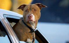 Agresyvūs šunys irgi turi teises?