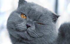 PATARIMAI. Kaip mylėti katę?