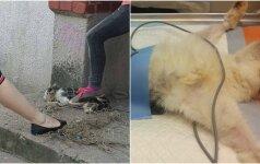 Katės gaudynės papiktino internautus: beglobiai gyvūnai gelbėjami žiauriais būdais
