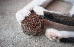 Šeimininkų žiaurumas: katėms šalinami nagai, šunims kerpamos uodegos ir ausys