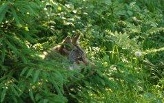 Gamtos fotografas: vilkai puikiai supranta - medžiotojas tu ar ne