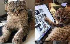 Turbūt mieliausia lietuviška instagramo žvaigždė: internautai seka kiekvieną katino Mobio žingsnį