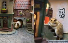 Kūrybingi žmonės paplušėjo: pastatė miniatiūrinį miestelį žiurkėnams