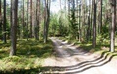 Lietuvos miškai – geriausi Europoje