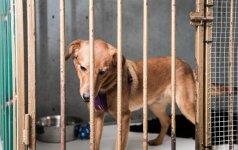 Gyvūnų prieglauda iš arti: šuneliai, kurie niekada neturės namų ir šeimininkų