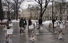 """Vilniuje įvyko vilkų """"piketas"""""""