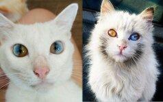 Katės užburiančiomis akimis