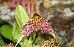 Įdomūs faktai apie orchidėjas