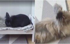 Gyvūnų mylėtojai stebina išradingumu: sukalė lovytę triušiams