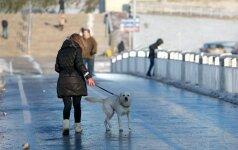Iki šiol niekas negali paaiškinti, kodėl šunys ant šio tilto taip elgiasi...