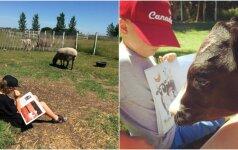 Rado būdą vienišiems gyvūnams padėti: paršelis pasijuto kur kas geriau
