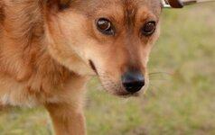 Ar griežtesnės bausmės gali pažaboti smurtą prieš gyvūnus?